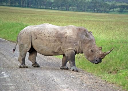 SAFARI - KENIA