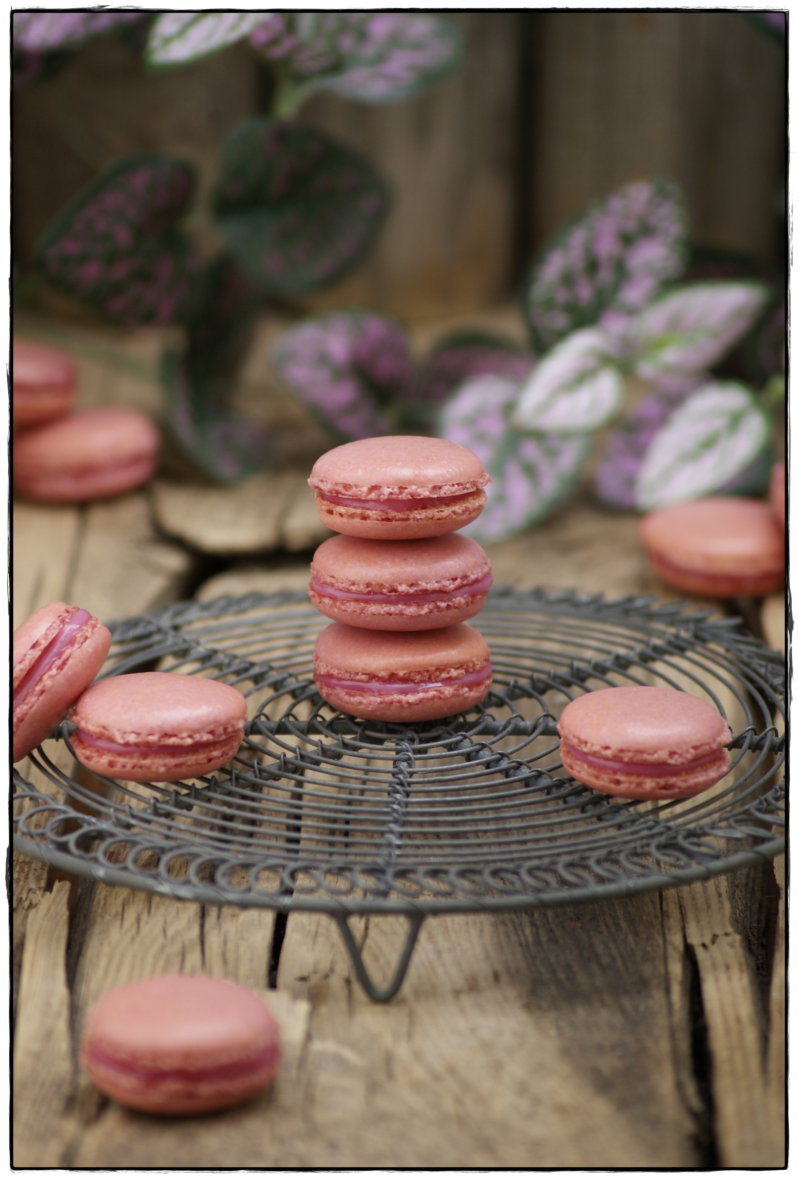 macarons de frambuesa 3.JPG